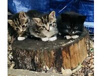 Cute kittens / PLEASE NOTE ONE OF THEM IS 530 NOT ALL !!!