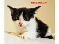 12 Week old kittens looking for a new forever home :-)