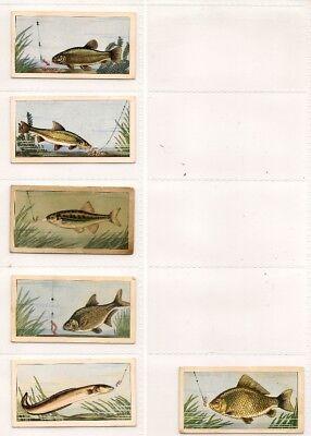 Barratt, FISH AND BAIT, Part Set of 6x Cards, VG/Good, 1962 comprar usado  Enviando para Brazil