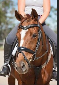 Educated eventing/performance mare Thornlands Redland Area Preview