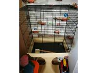 Medium sized bird cage