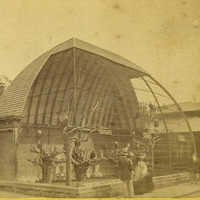 photo NEW YORK CENTRAL PARK stereoview AVIARY Vultures birds MOULTON
