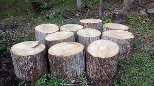 Basswood firewood blocks