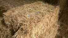Grass hay small squares Iona Cardinia Area Preview