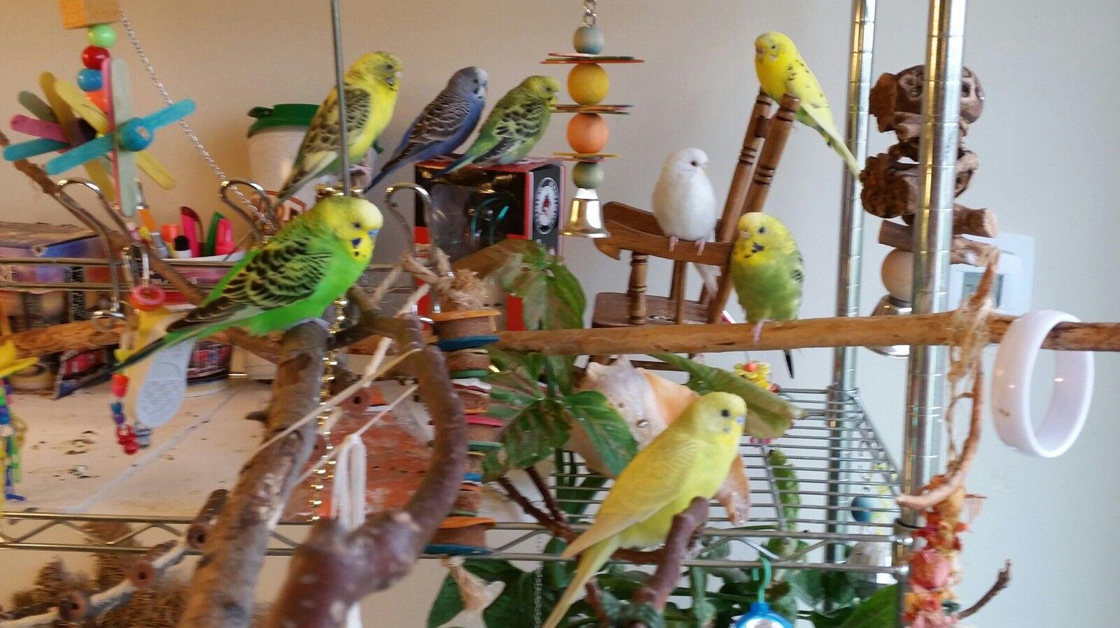Serenity Aviary Spa