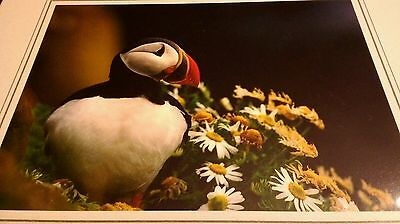 Puffin Bird Flowers Animal Photo Print 8x10 New Matted HQ Gift Sealed