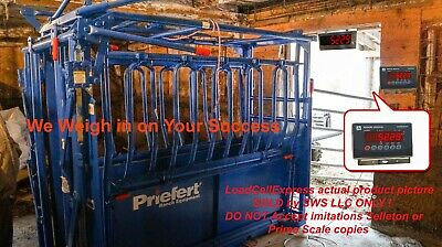 Livestock Squeeze Chute Scale Cattle Hog Sheep Goats Pigs Stainless Head Remote
