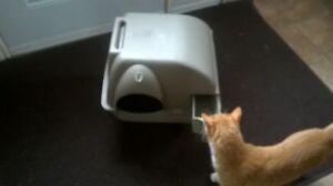 cat litter box & fountain