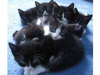 Kittens looking for forever home.