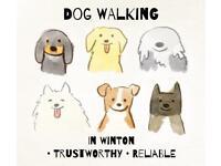 Dog walking in Winton