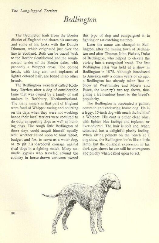"""The Bedlington Terrier - Vintage Dog Art Print - Matted """"G"""""""