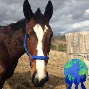 Agistment or stabling wanted in Maitland area Telarah Maitland Area Preview