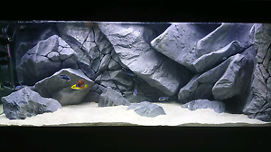 Amazing 5 foot aquarium with Aquadecor 3D background Seaford Meadows Morphett Vale Area Preview