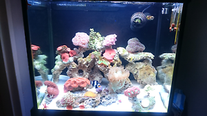 Fish tank aquarium marine Saltwater fish coral Roselands Canterbury Area Preview