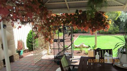 Talking lorikeets for sale + cage and all stuff Salisbury North Salisbury Area Preview