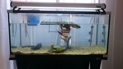 Aquarium setup includes turtle Evanston Gardens Gawler Area Preview