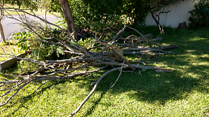 Free firewood Eagle Vale Campbelltown Area Preview