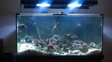 Marine Tank & cabinet full setup Kingsley Joondalup Area Preview
