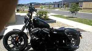 Harley Davidson iron 883 Berwick Casey Area Preview