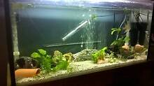 3ft tank and Fish Narrabundah South Canberra Preview