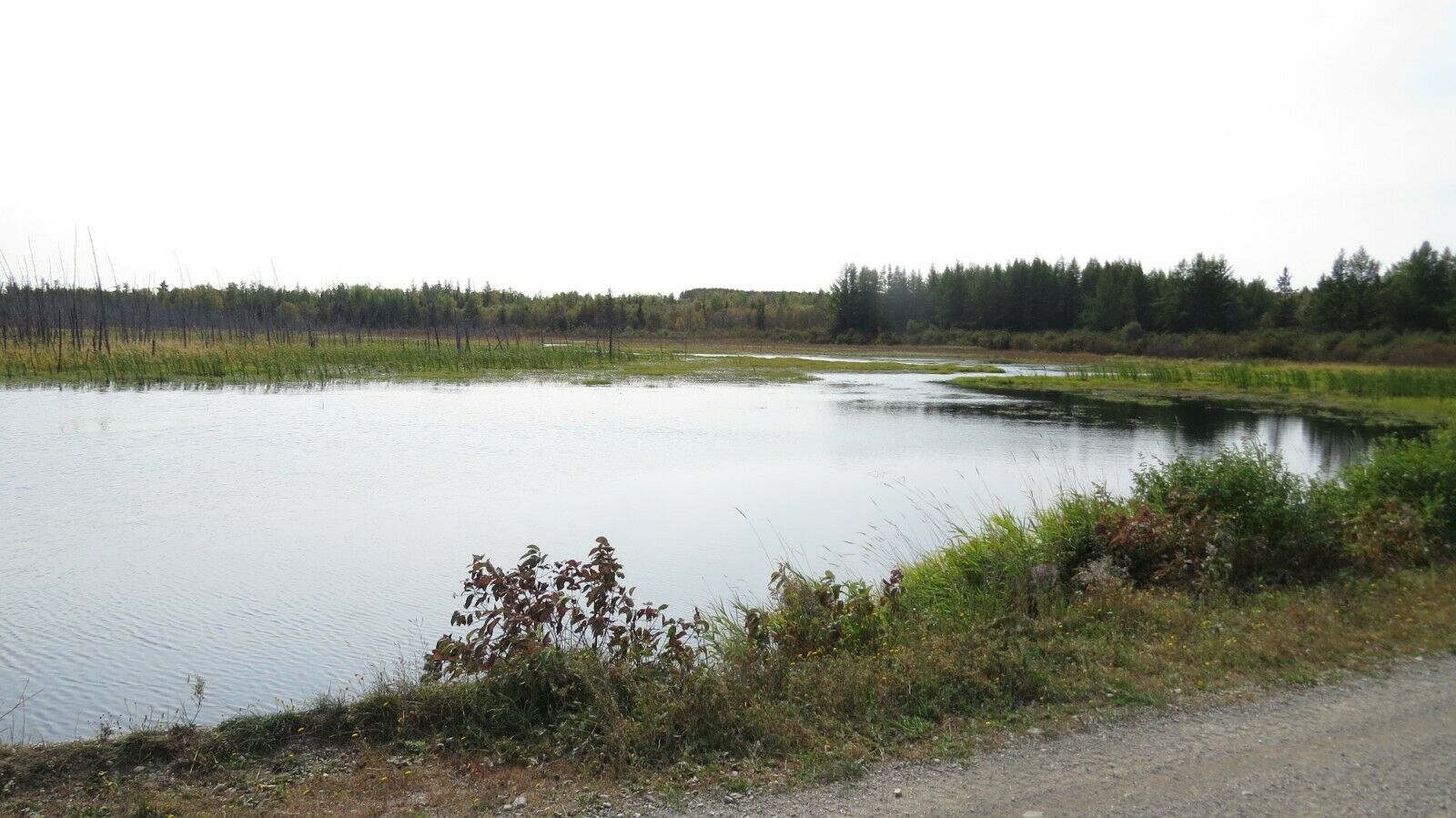 OWN 87 ACRES /- OF LAND IN NORTHERN MAINE NEXT TO THE CANADIAN BORDER  - $681.00