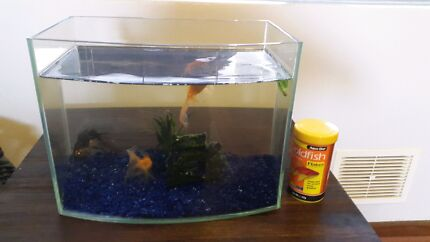 Fish and Fish Tank Joondanna Stirling Area Preview