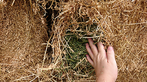 Prime lucerne hay - square bales Somersby Gosford Area Preview