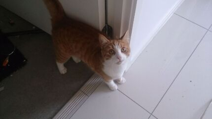 Free cat to good home Wynnum West Brisbane South East Preview
