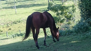Unwanted horses or ponies Mooloolah Valley Caloundra Area Preview