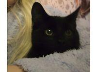 X2 black male kittens needing a loving home