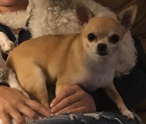 Lost Dog:  Offering a reward