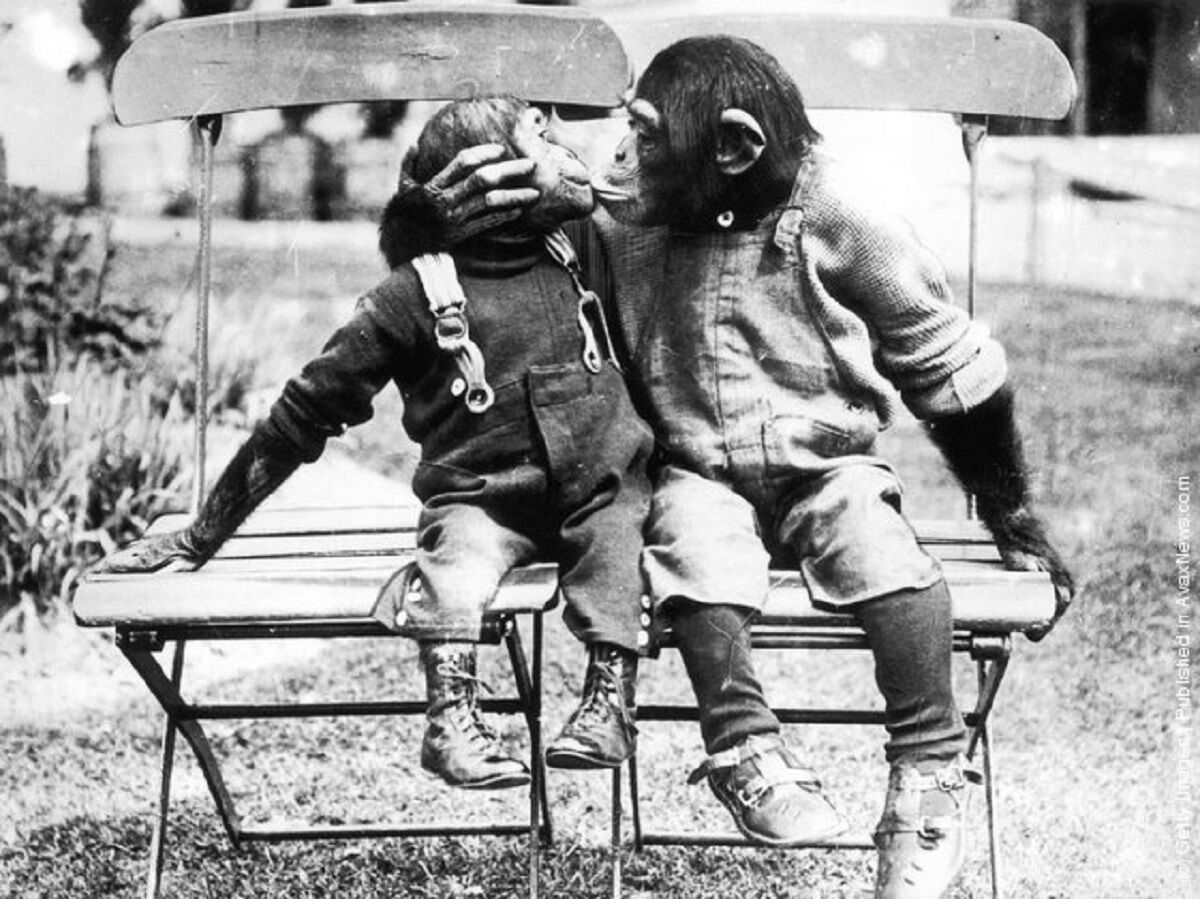 2MA: 2 Monkeyz Antiques