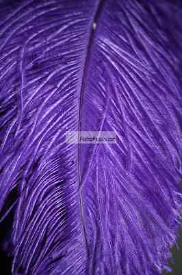 Purple Ostrich Feathers Plume Wing Horse Feather 22-24 inch 5  Pcs - Purple Feather