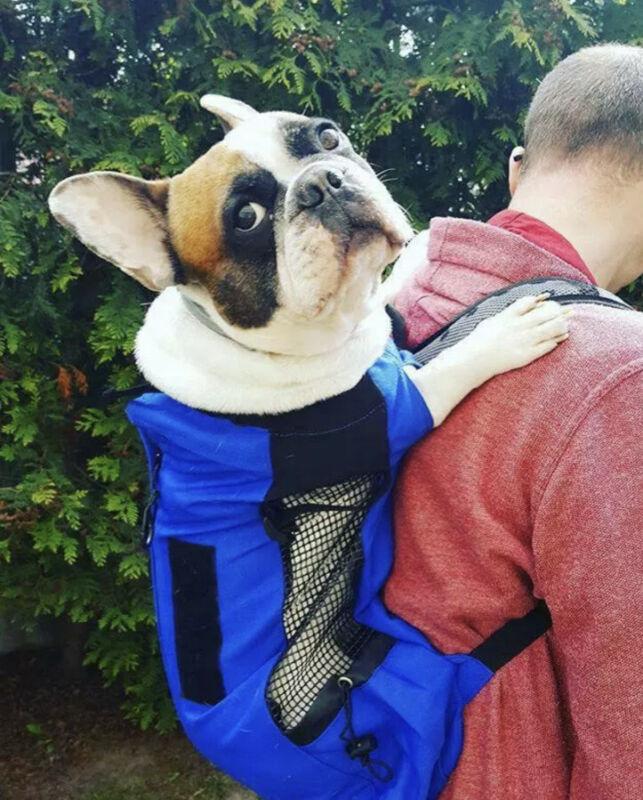 K9 Sport Sack Trainer | Dog Carrier Dog Backpack For Large Pets
