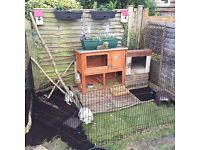 Male and female rabbits with hutch
