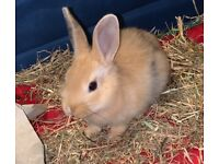 Baby Rabbits - Need To Go Urgent!