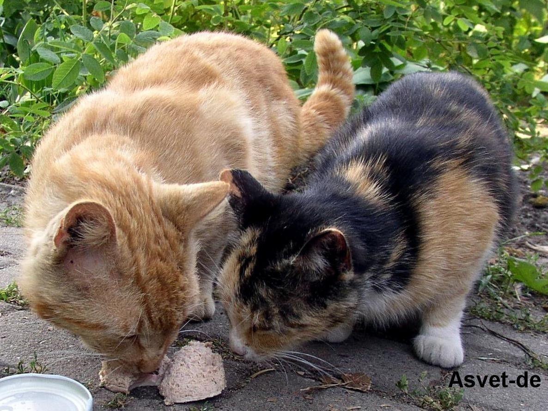 """Asvet 12-Kräuter-Mischung """"Spezial"""" für 20 Katzen, bei/nach Wurmkur Entwurmung"""