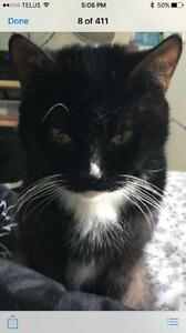 "Young Female Cat - Domestic Short Hair (Black & White): ""Maggie"""