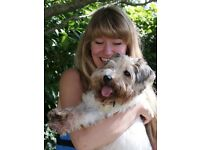 Expert Force-Free Dog Trainer in Central London