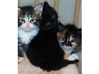 Litter of 6 kittens only 1 left now
