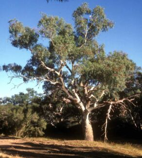 AFFORDABLE TREE SERVICES WESTERN SUBURBS St Albans Brimbank Area Preview