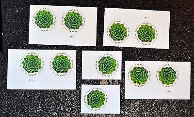 2017Usa  10 Global Forever Rate  Green Succulent International Sase Mint Postage