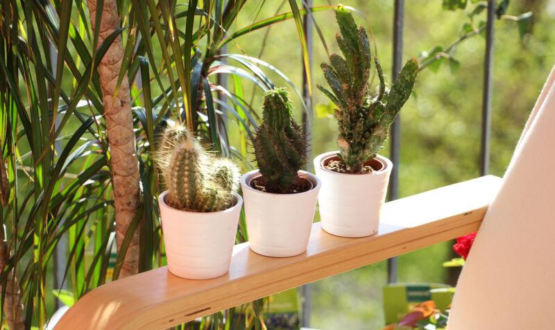 Egal ob Palme oder Kaktus: Grünes macht den Balkon gleich doppelt so schön. (© Sina Huth)