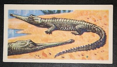 GHARIAL     Vintage Colour Card  VGC