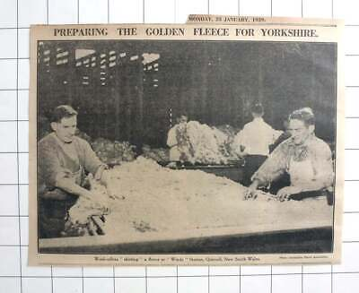 1939 Wool Rollers Skirting A Fleece At Windy Station, Quirindi, Nsw