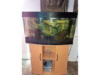 Bow Front Juwel - 180 Litre Fish Tank Full Setup