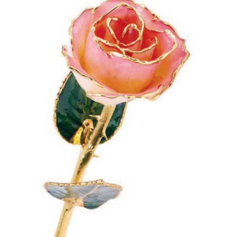 24K Yellow Gold Trimmed Pink Cream Rose Real Long Stemmed Lacquered Rose
