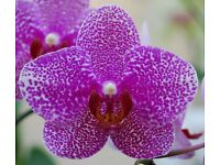 Orchid Thai hot oil Massage, specialist massuse trained in deep tissue, sweedish and relaxation