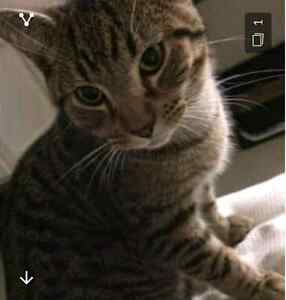 Lost cat answers to Oscar Werribee Wyndham Area Preview
