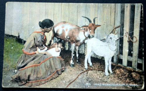 48289 Ak Goat Child Is From Nut An Ziegeneuter Fed Cuba Nursing Child